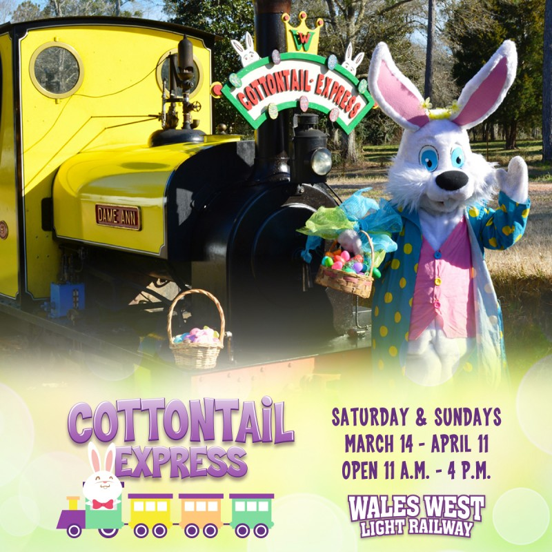 The Cottontail Express